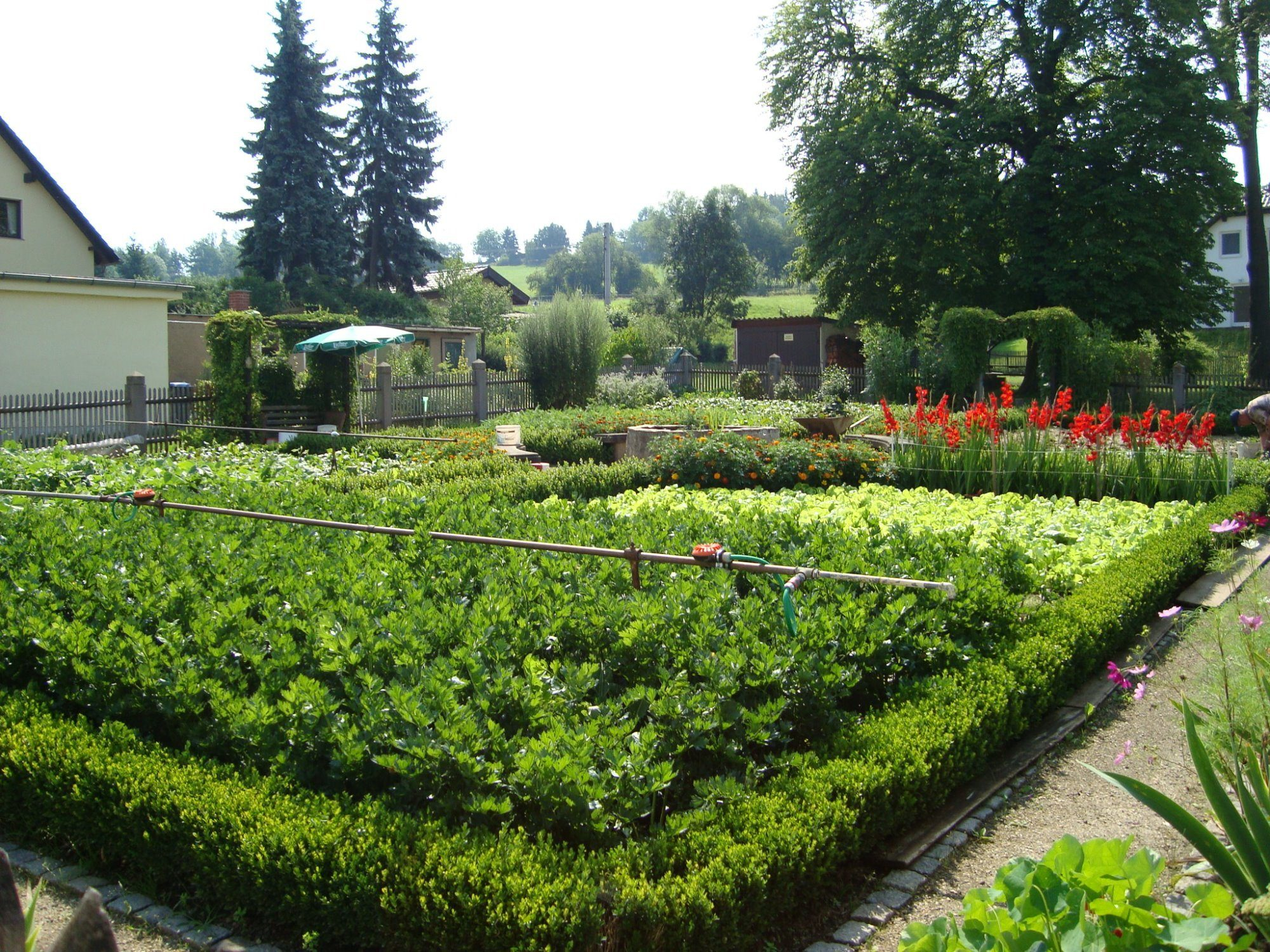 Bauerngarten in vollem Wachstum